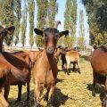 Educational Farm of Saint-Hilliers AEDF, Hameau de Savigny close to Provins