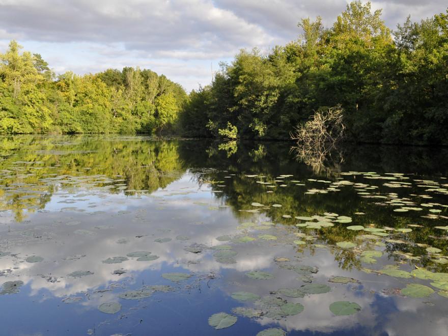 Réserve Naturelle Nationale de la Bassée, proche de Provins