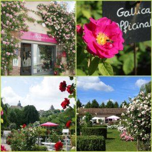 Planche photos de la rose et Roseraie de Provins pour la presse