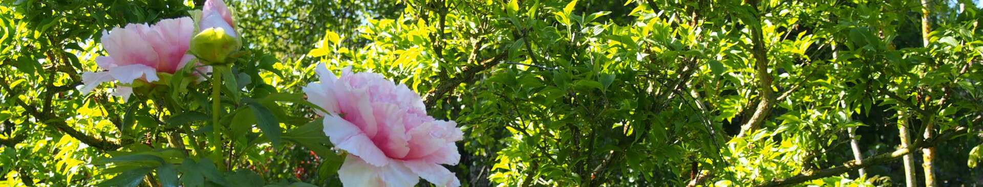 Nature and Gardens in Provins and its region