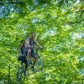 Jumping Forest park, Tree Climbing, Laser-Game and Archery Battle, in the forest of Chenoise, close to Provins