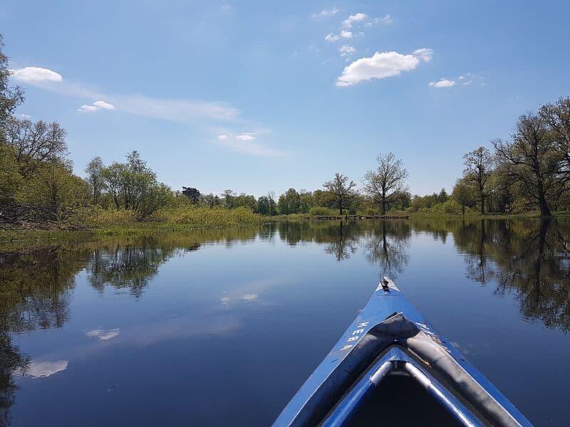 Découvrez la faune et la flore aquatiques de la Seine, à pied et en canoë !