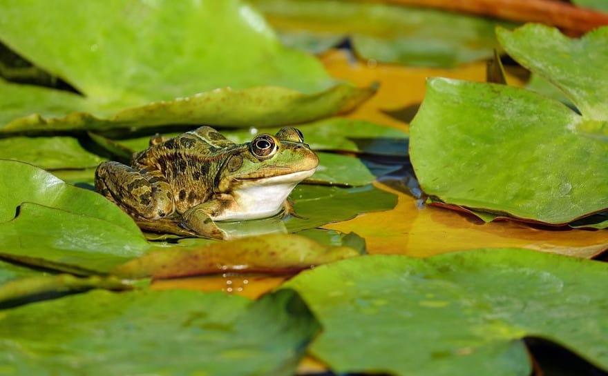 A la découverte des Amphibiens, sorties nature avec la Réserve Naturelle Nationale de la Bassée, à Gouaix proche de Provins