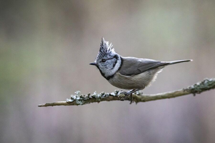Formations oiseaux, sorties nature avec la Réserve Naturelle Nationale de la Bassée, à Gouaix proche de Provins