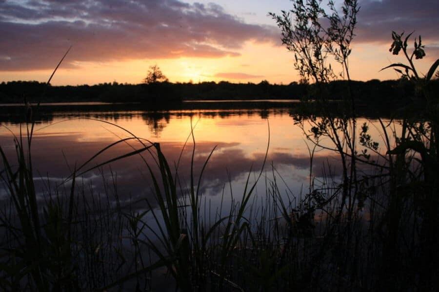 Les secrets de la Cocharde, sortie nature avec la Réserve Naturelle Nationale de la Bassée, à Gouaix proche de Provins