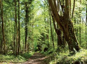 Les « tocards » de Boitron, randonnée pédestre dans la Vallée des 2 Morin, région de Provins