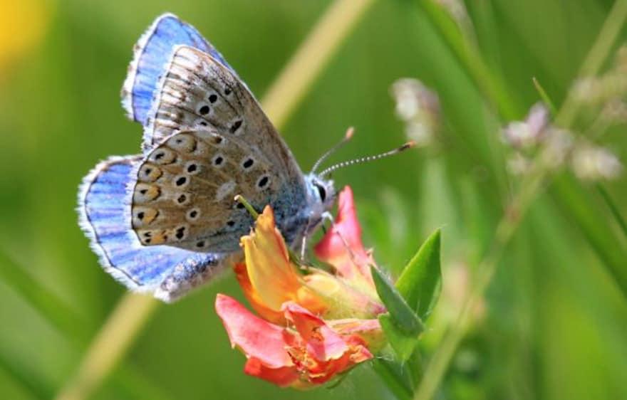 Biodiversité en Brie des Morin, site internet et inventaire de la biodiversité dans le périmètre des Vallées des 2 Morin, au nord de Provins !